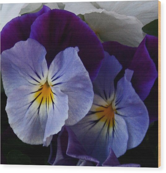 Pansy Delight Wood Print