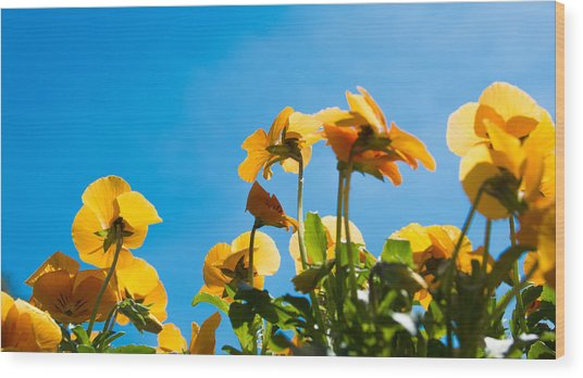 Pansy Flowers And The Clear Blue Sky Wood Print by Priyanka Ravi