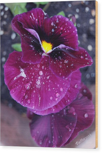 Pansy In The Dew Wood Print by Vallee Johnson