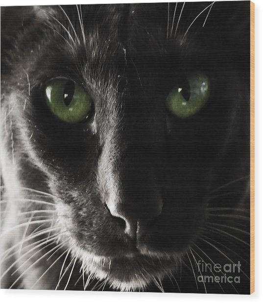 Panther Eyes Wood Print