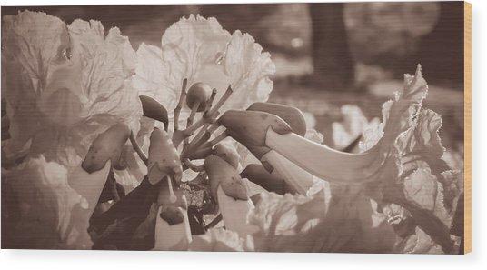 Paper Flowers - Sepia  Wood Print