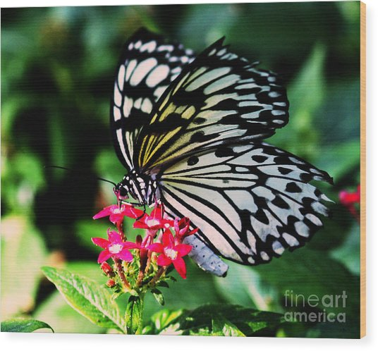 Paper White Butterfly Wood Print