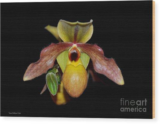 Paphiopedilum 'summer Ice' Orchid Wood Print