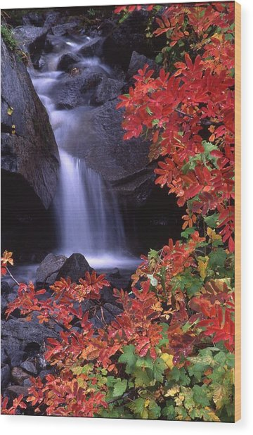 Paradise Valley Stream In Fall Wood Print