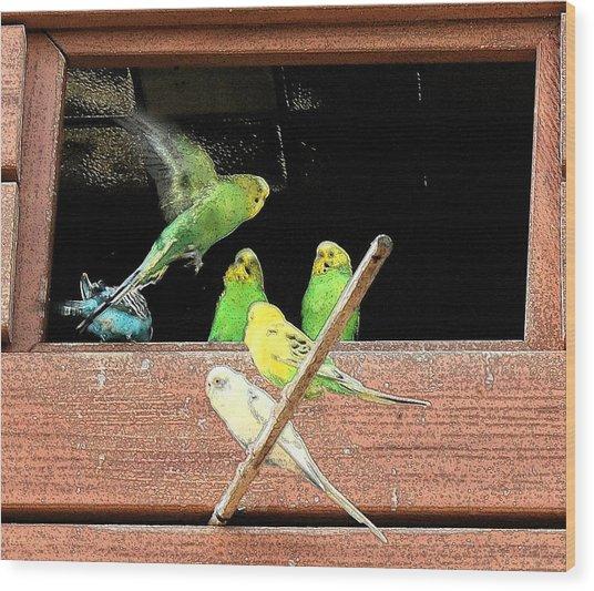 Parakeet Flutter Wood Print