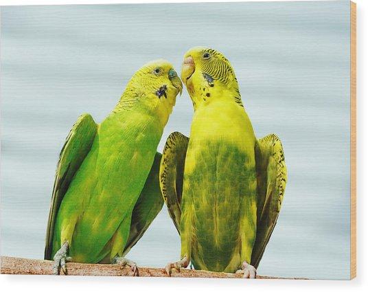 Parakeet Love Wood Print