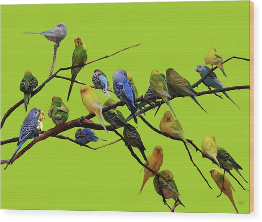 Parakeet Paradise Wood Print