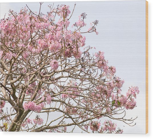 Parakeets Hiding In The Flowers Wood Print by Brian Magnier