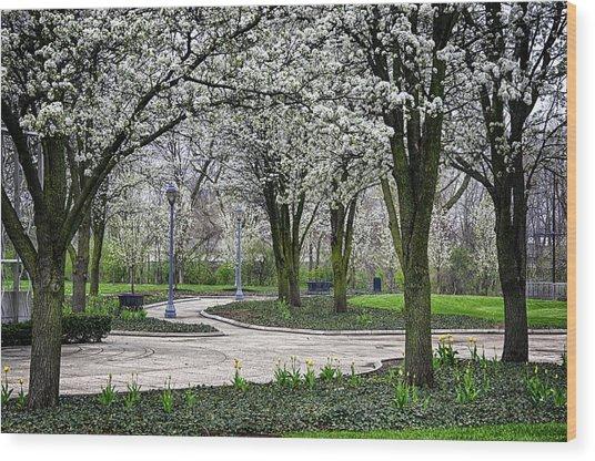 Park Blossoms Wood Print