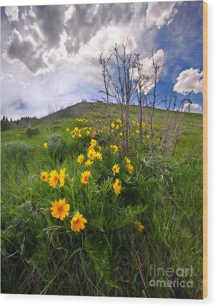 Park City Slopes In Spring Wood Print by Matt Tilghman