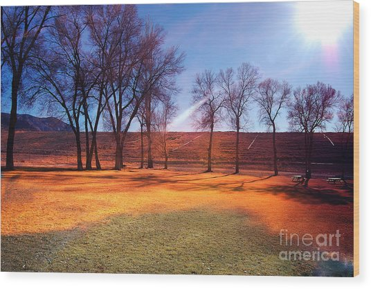 Park In Mcgill Near Ely Nv In The Evening Hours Wood Print