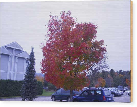 Parked Under Red Tree Wood Print by Dick Willis