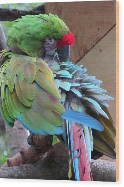 Parrot Feathers Wood Print by Loretta Pokorny