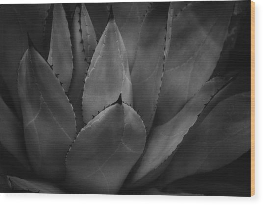 Wood Print featuring the photograph Parrys Agave  by Ben Shields
