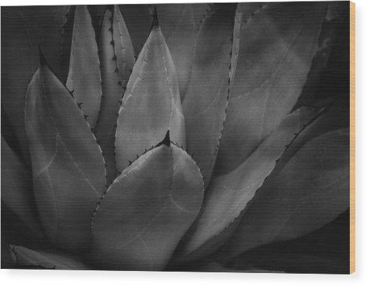 Parrys Agave  Wood Print