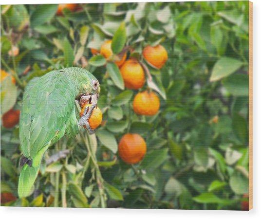 Pasadena Parrot Wood Print