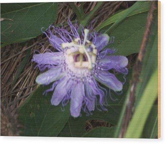 Passion Flower I Wood Print
