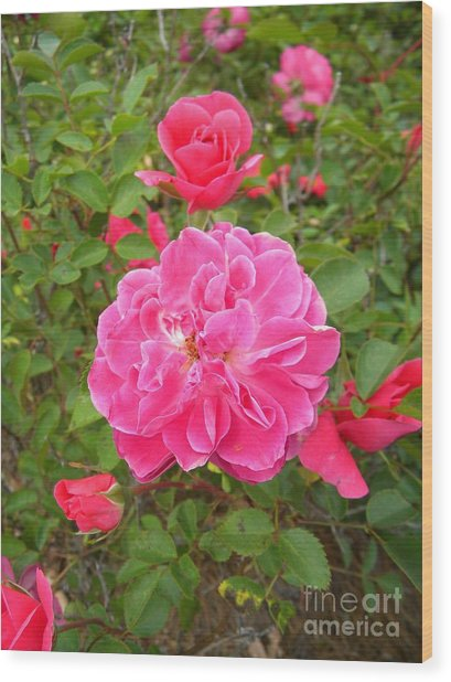 Passionate Pink Springtime Wood Print