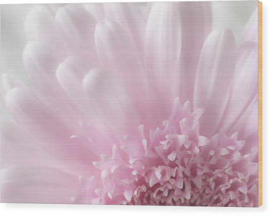 Pastel Daisy Wood Print