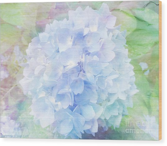 Pastel Hyacinth Wood Print