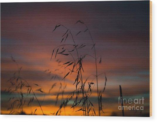 Pastel Moment Wood Print
