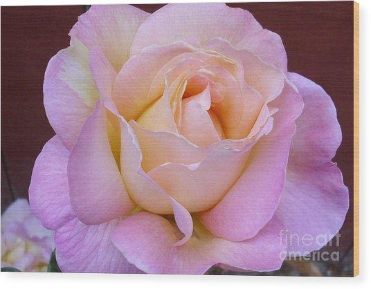 Pastel Rainbow Rose Wood Print