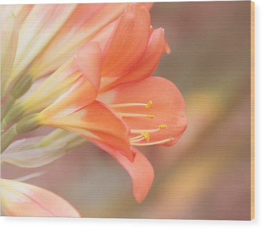 Pastels Wood Print