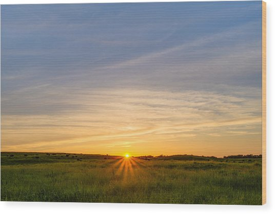 Pasture At Sunset Wood Print