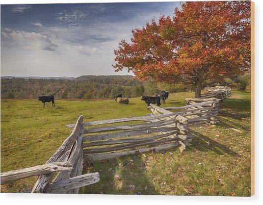 Pasture Fence Wood Print