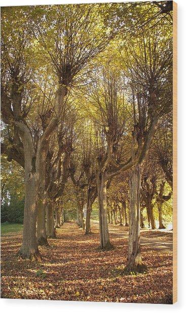 Path 2 - Garden Photography Wood Print