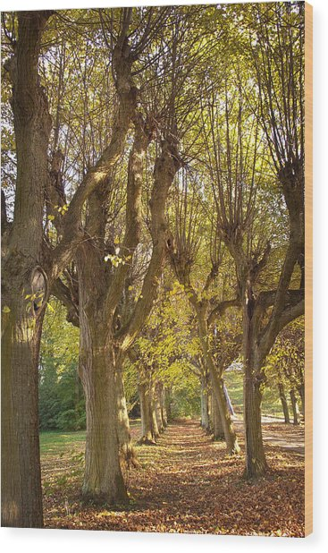 Path 4- Ostromecko Gardens Wood Print