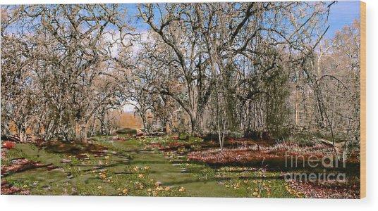 Path Wood Print by David Taylor