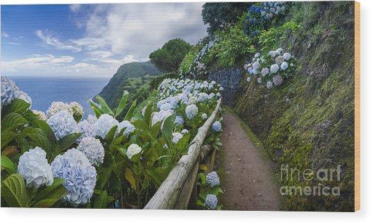 Path Hydrangea Wood Print by N R