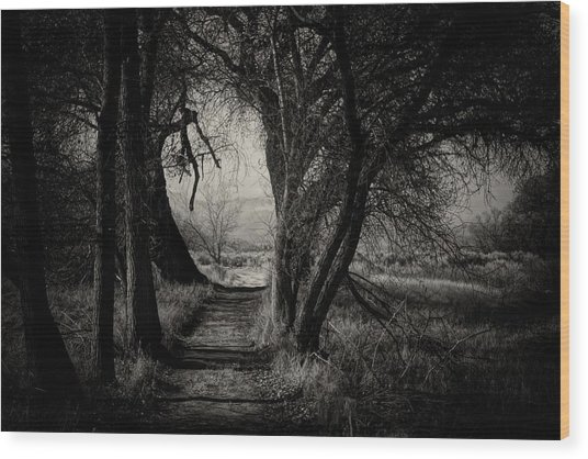 Path- Kern River Preserve Wood Print