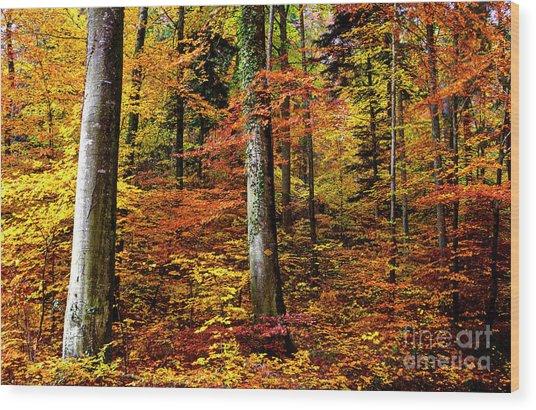 Path Of Autumn 1 Wood Print