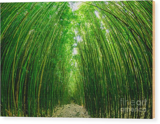 Path Through A Bamboo Forrest On Maui Hawaii Usa Wood Print