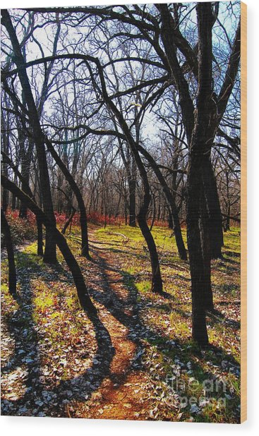 Path Thru The Oaks Wood Print by David Taylor