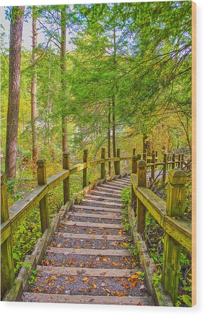 Pathway To The Falls  Wood Print by SCB Captures