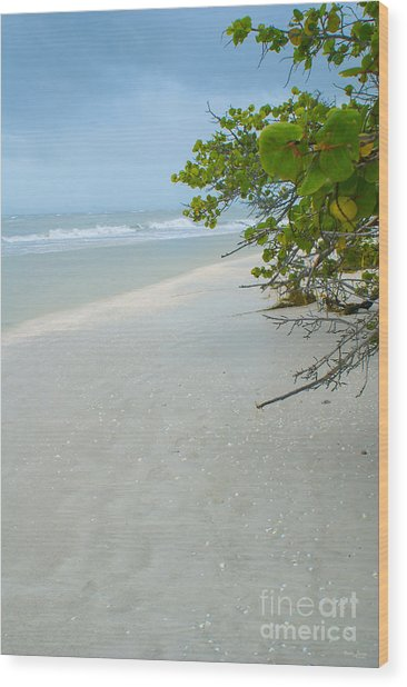 Peace And Quiet On Sanibel Island Wood Print
