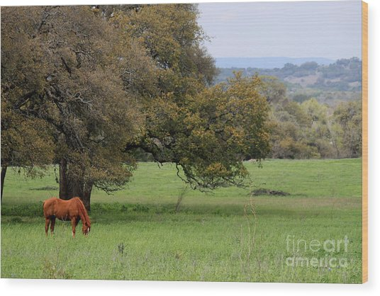 Peace In The Hill Country Wood Print