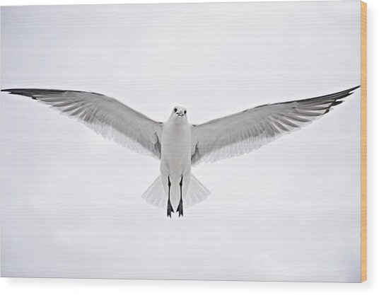 Peace On Earth  Good Will To Men Wood Print by Bonnie Barry