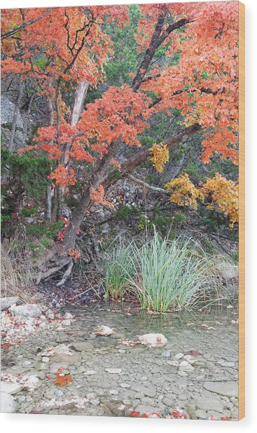 Peaceful Retreat Lost Maples Texas Hill Country Wood Print