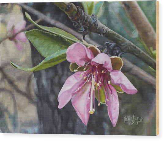 Peach Blossom Wood Print