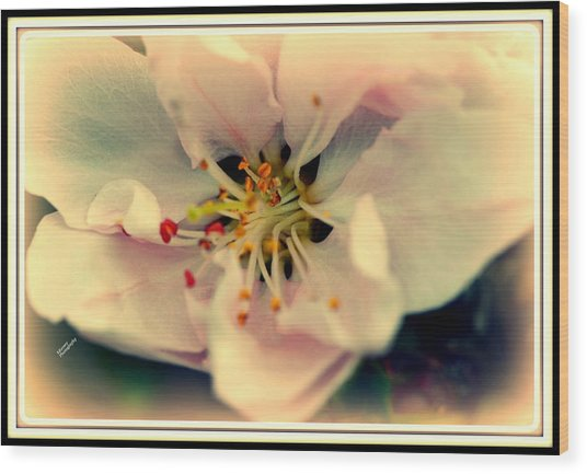 Peach Flower Wood Print