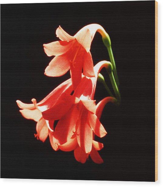 Peach Flowers On Black Background Wood Print