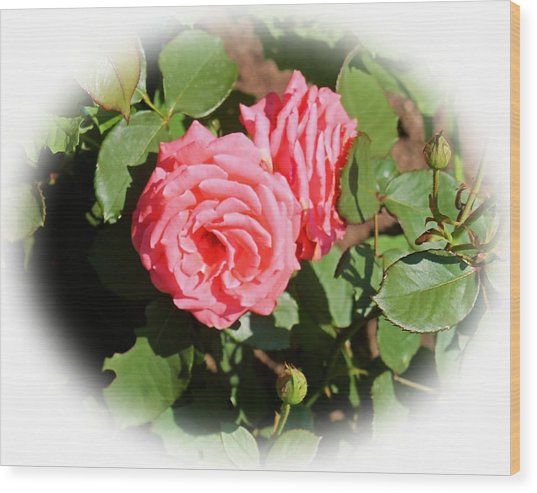 Peach Rose Wood Print by Victoria Sheldon