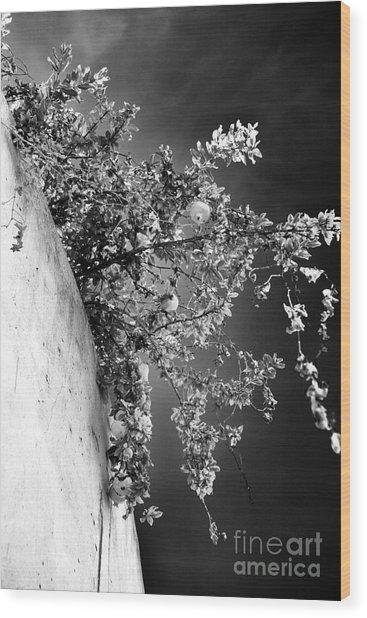 Peaches In Lisbon Wood Print by John Rizzuto