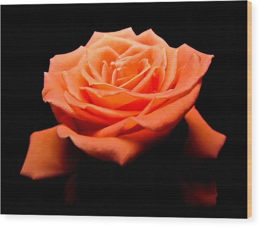Peachy Rose II Wood Print