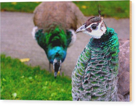 Peacock 4 Wood Print