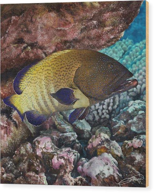 Peacock Grouper Wood Print by Owen Bell
